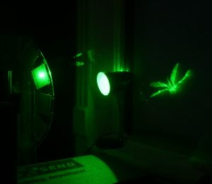Holographic Projection for Light Windows